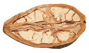 baobab fruit pulp with fibre --- Фото плода баобаба в разрезе. Видно, что он состоит из разных видов растительного волокна - растворимого (светлее) и нерастворимого (темнее), полезного при сахарном диабете
