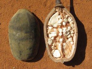 Зрелый плод баобаба в разрезе. Мякоть и семена баобаба имеют высокую антиоксидантную активность и множество биологически активных компонентов -- Mature Baobab Fruit Pulp