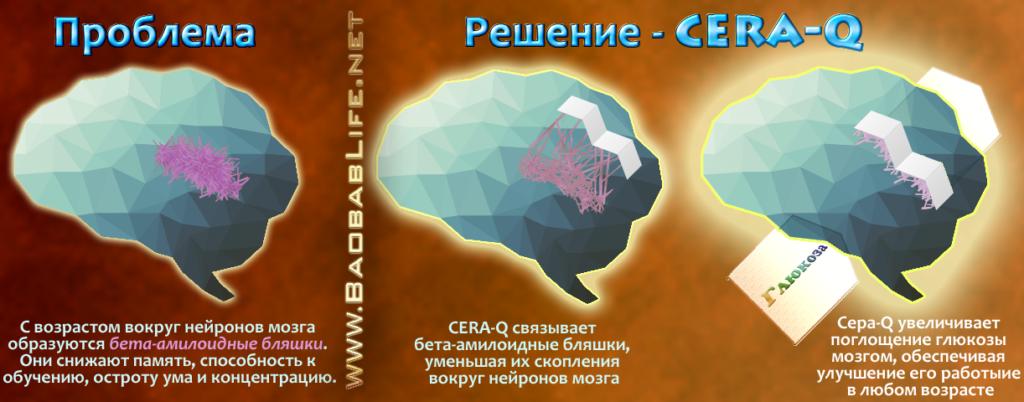 С возрастом вокруг нейронов мозга образуются бета-амилоидные бляшки. CERA-Q связывает бета-амилоидные бляшки, уменьшая их скопления вокруг нейронов мозга. Это улучшает работу ума, память и концентрацию
