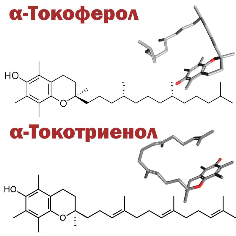 Альфа токоферол и токотриенол png без фона