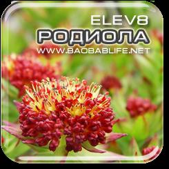 Родиола Розовая - ингредиент Elev8