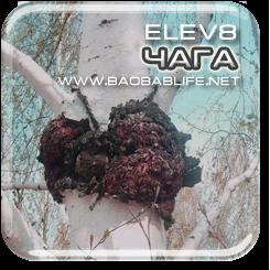 Чага - ингредиент капсул Elev8