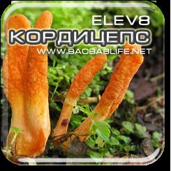 Кордицепс - ингредиент Elev8