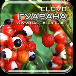Гуарана - ингредиент капсул Elev8