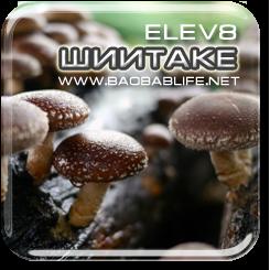 Шиитаке - ингредиент Elev8