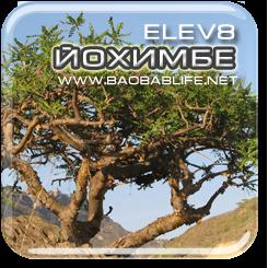 Йохимбе - ингредиент капсул Elev8