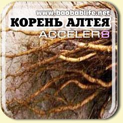 Корень Алтея - ингредиент Acceler8