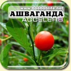 Ашваганда - ингредиент Acceler8