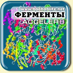 Энзимы в составе Акселер8