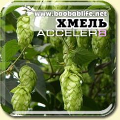 Хмель - ингредиент Acceler8