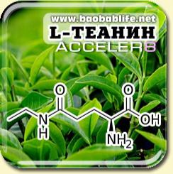 L-теанин - ингредиент Acceler8