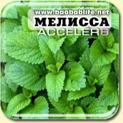 Мелисса - ингредиент Acceler8