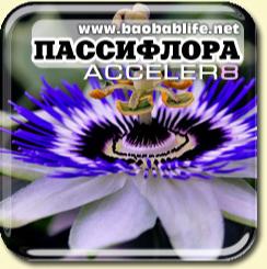 Страстоцвет - ингредиент Acceler8
