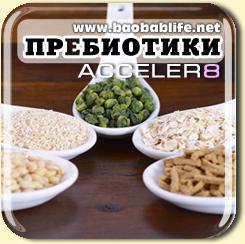 Пребиотики в составе Акселер8